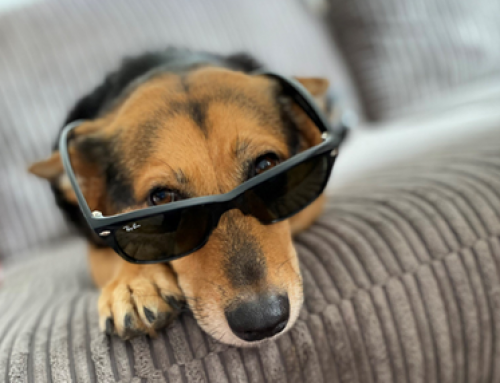 Getting Your Home Ready and Clean for a Pet