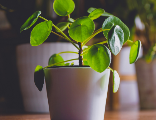Best Low-Maintenance Houseplants For Busy People